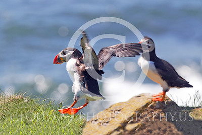 AN - Puffin 00022 by Tony Fairey