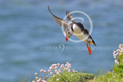 AN - Puffin 00015 by Tony Fairey