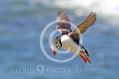 AN - Puffin 00012 by Tony Fairey