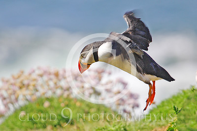 AN - Puffin 00010 by Tony Fairey