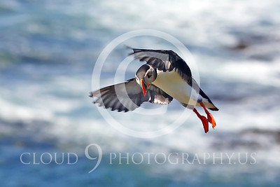 AN - Puffin 00020 by Tony Fairey