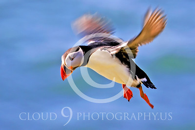AN - Puffin 00001 by Tony Fairey