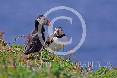 AN - Puffin 00024 by Tony Fairey