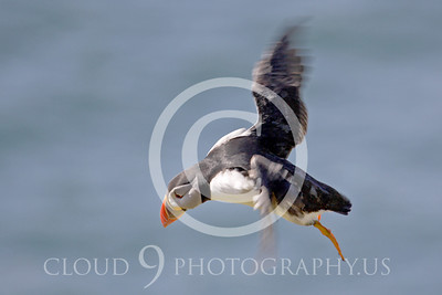 AN - Puffin 00008 by Tony Fairey