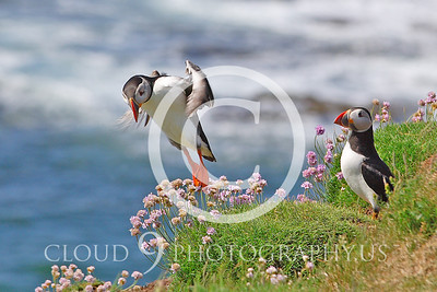 AN - Puffin 00011 by Tony Fairey