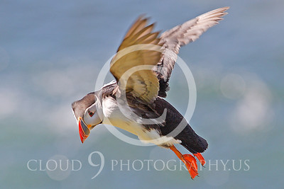AN - Puffin 00013 by Tony Fairey