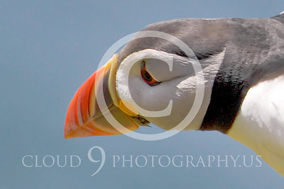 AN - Puffin 00017 by Tony Fairey