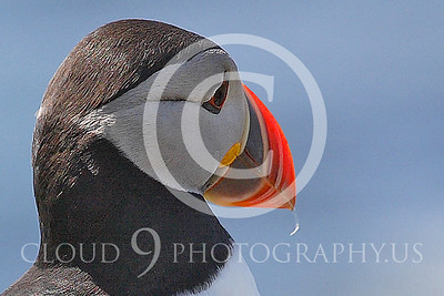 AN - Puffin 00023 by Tony Fairey