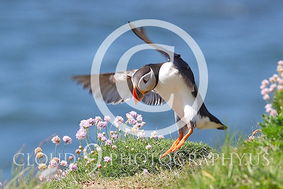 AN - Puffin 00025 by Tony Fairey