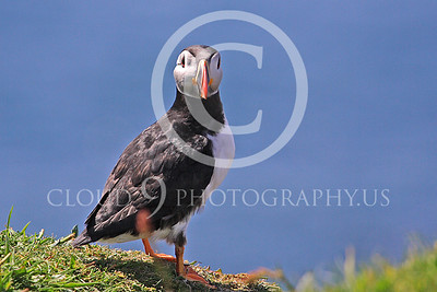AN - Puffin 00009 by Tony Fairey