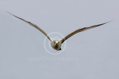 Seagull 00002 by Peter J Mancus