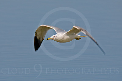 Seagull 00012 by Peter J Mancus