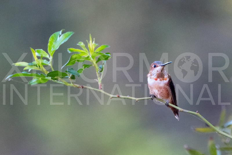 Hummingbird - Need ID