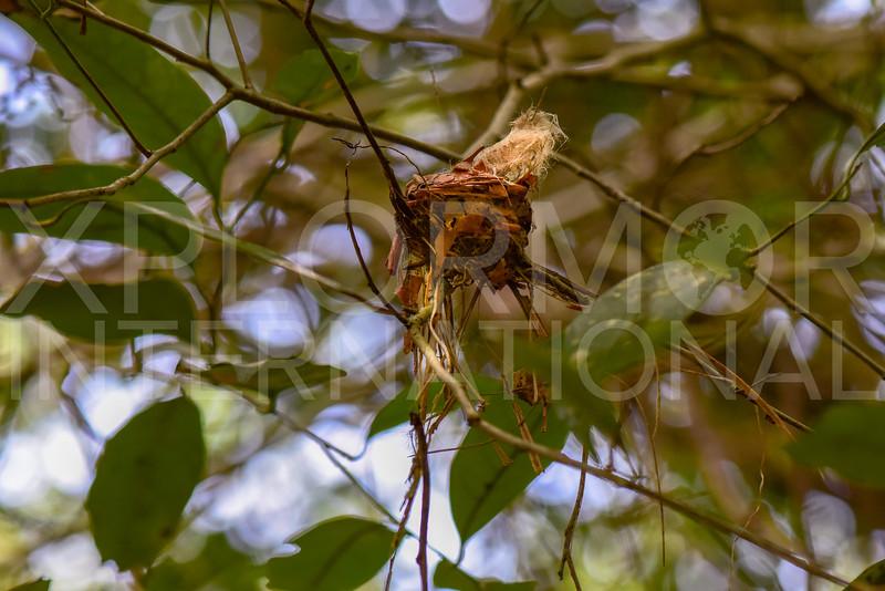 Bird Nest - NEED ID