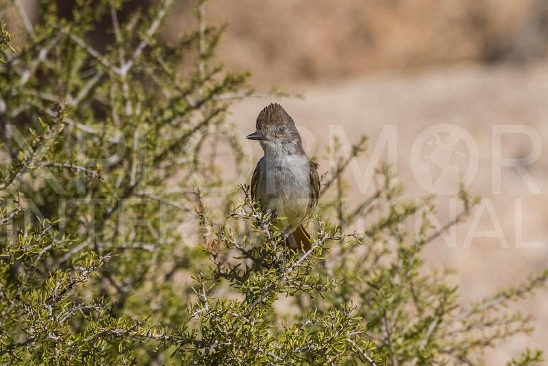 Bird - NEED ID