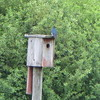 """<a href=""""http://www.whatbird.com/birdexpert/StateColorSize/2/6513/birdexpert.aspx"""">http://www.whatbird.com/birdexpert/StateColorSize/2/6513/birdexpert.aspx</a><br /> <br /> <a href=""""http://www.whatbird.com/browse/objs/all/birds_na_147/38/location/6513/minnesota"""">http://www.whatbird.com/browse/objs/all/birds_na_147/38/location/6513/minnesota</a>"""