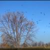 "Birds (like the movie)!<br /> <a href=""https://youtu.be/vIVdlRvSl9s"">https://youtu.be/vIVdlRvSl9s</a><br /> <br /> #salphotobiz<br /> <a href=""https://www.instagram.com/p/CG8Oe6TH6lL/"">https://www.instagram.com/p/CG8Oe6TH6lL/</a><br /> <br /> The Birds movie!<br /> <a href=""https://salphotobiz.smugmug.com/Movie-Archives/i-cmRvvZ6"">https://salphotobiz.smugmug.com/Movie-Archives/i-cmRvvZ6</a>"