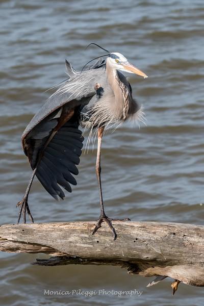 Virginia-Birds-24-27-March-2017-1271