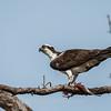Virginia-Birds-24-27-March-2017-1329