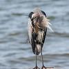 Virginia-Birds-24-27-March-2017-1184