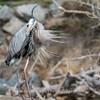 Virginia-Birds-24-27-March-2017-1286
