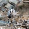 Virginia-Birds-24-27-March-2017-1287