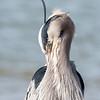 Virginia-Birds-24-27-March-2017-1252