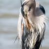 Virginia-Birds-24-27-March-2017-1253