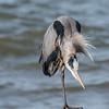 Virginia-Birds-24-27-March-2017-1202