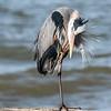 Virginia-Birds-24-27-March-2017-1205