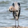 Virginia-Birds-24-27-March-2017-1186