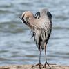 Virginia-Birds-24-27-March-2017-1191