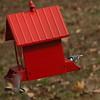 North Carolina Chickadee and Downy Woodpecker-11272011-130259(f)