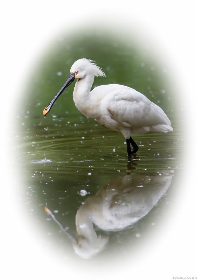 WhiteBird-IMG_0317-120609