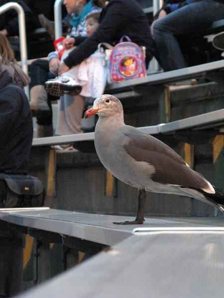 San Diego SEA WORLD'de tribünlerde bir seyirci...