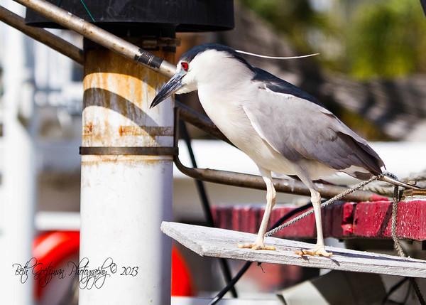 Birding Events