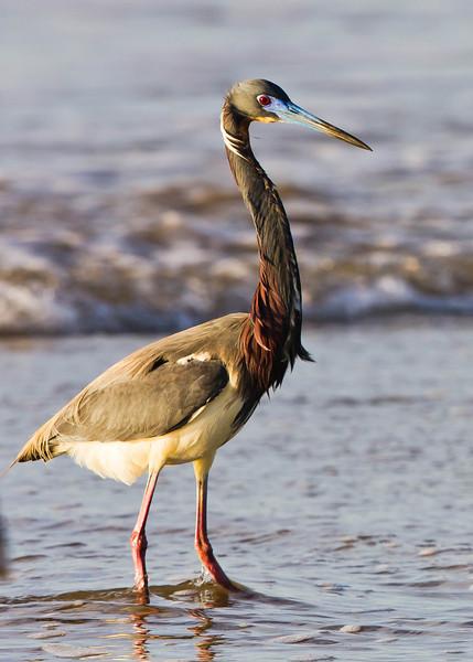 Lifetime Bird List