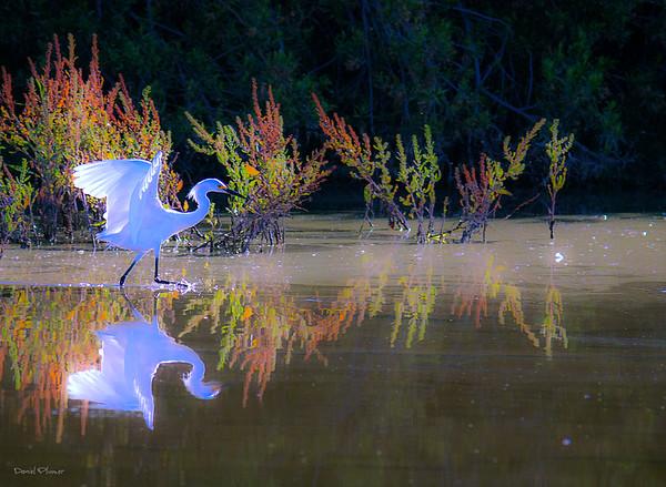 Egret Paradisio