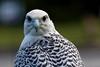 Audubon Birds_424_20180915