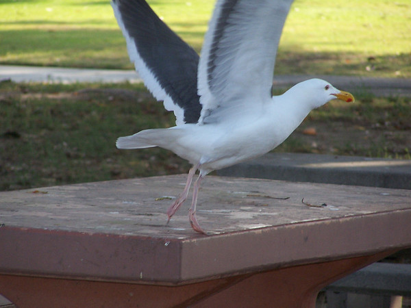 Seagull - the Takeoff