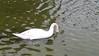 Swan, Hollywood Forever - 6