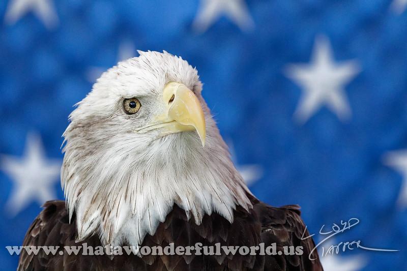 Audubon Birds_240_20180915