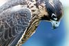 Audubon Birds_320_20180915