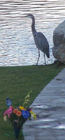 Egret at Rose Hills - 4