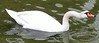 Swan, Hollywood Forever - 4