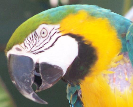Kyle the Parrot - 1