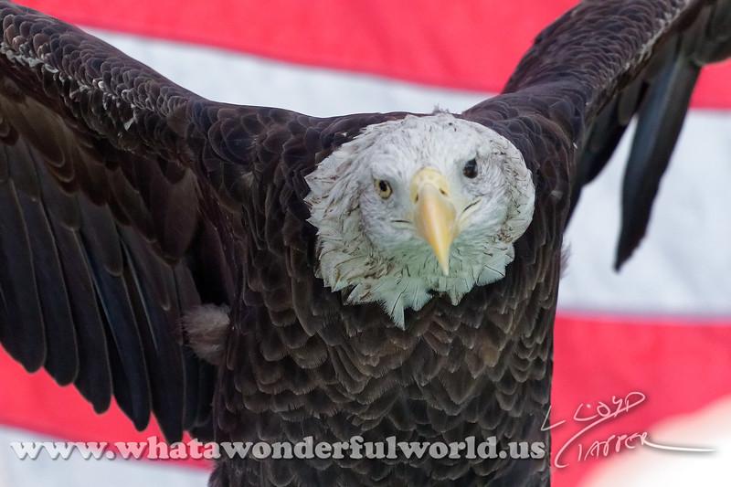 Audubon Birds_255_20180915