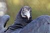 Audubon Birds_264_20180915