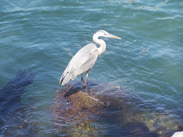 Crane at Balboa - 2