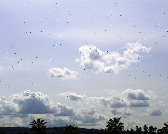Flock of Seagulls - 2